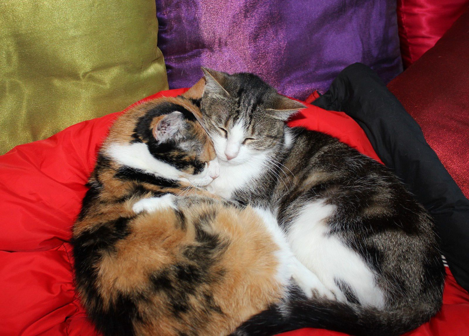 Deux chattes. Amour sans paroles.