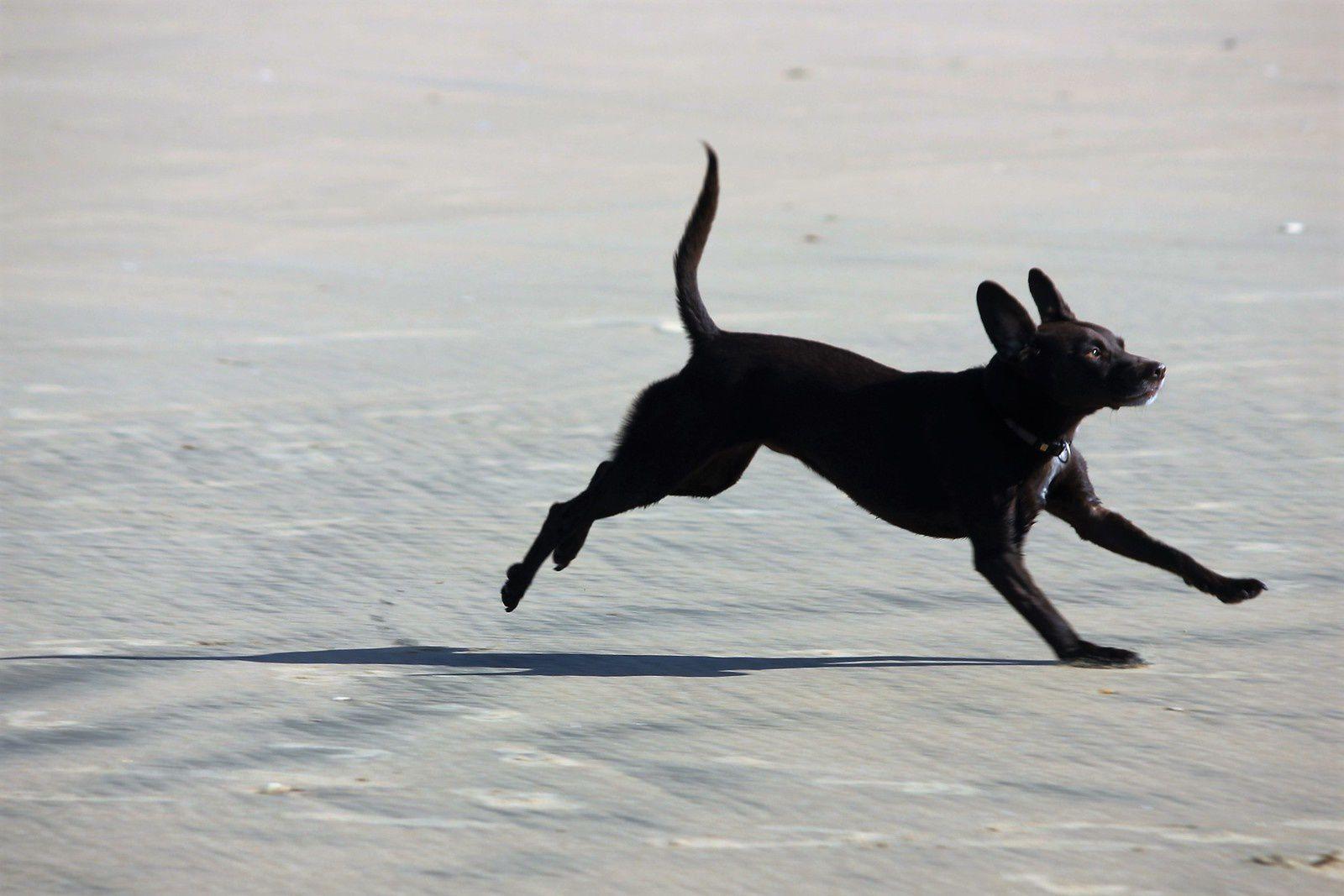 Les chiens interdits de plage pendant la saison touristique ratrappent le temps perdu!