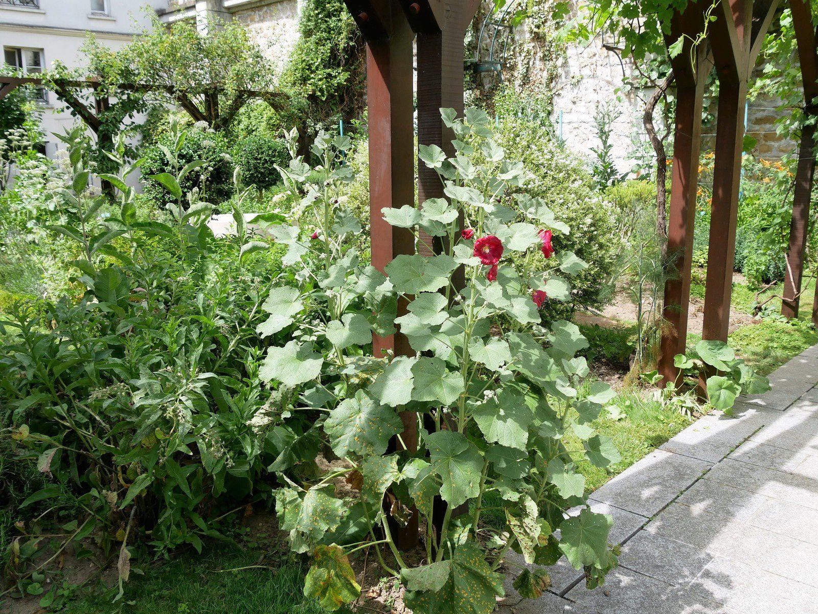 Le jardin des Abbesses. Passage des Abbesses. Les simples.