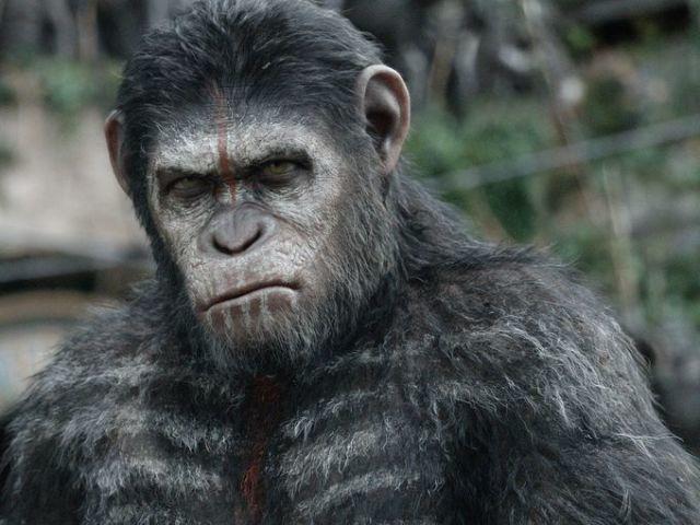La Planète des singes : L'affrontement : 10 photos