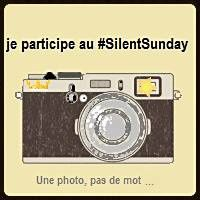 Silent Sunday # 3