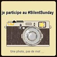 Silent sunday # 7
