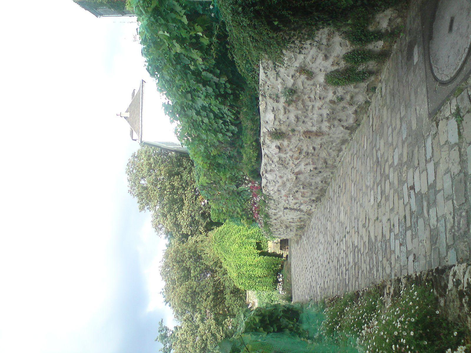 Montmartre, ses vignes, rue des Saules et Saint-Vincent