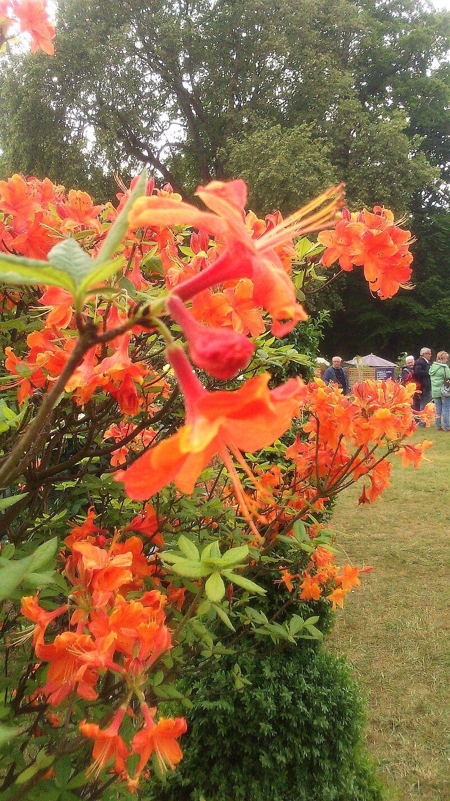 Les journées des plantes de Courson à Chantilly