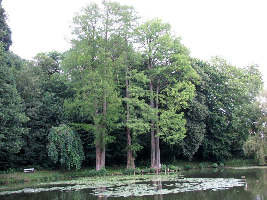 L'étang du château de Franconville