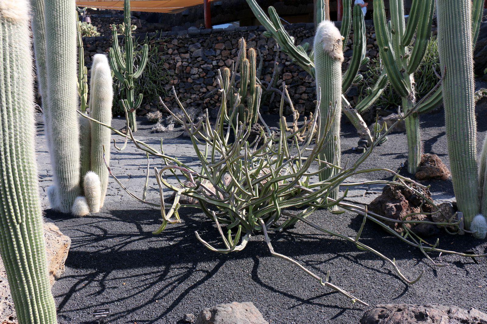 Le jardin de cactus, Lanzarote (Canaries)