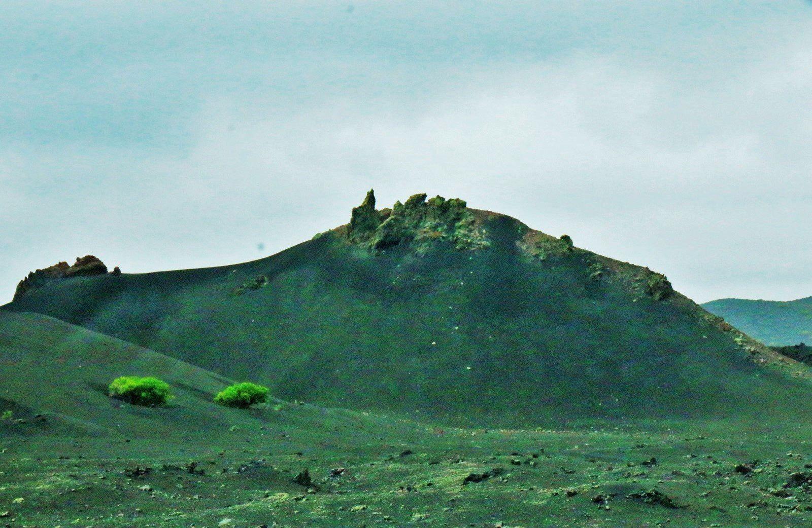 Montañas del Fuego, cratères et plantes (Canaries)