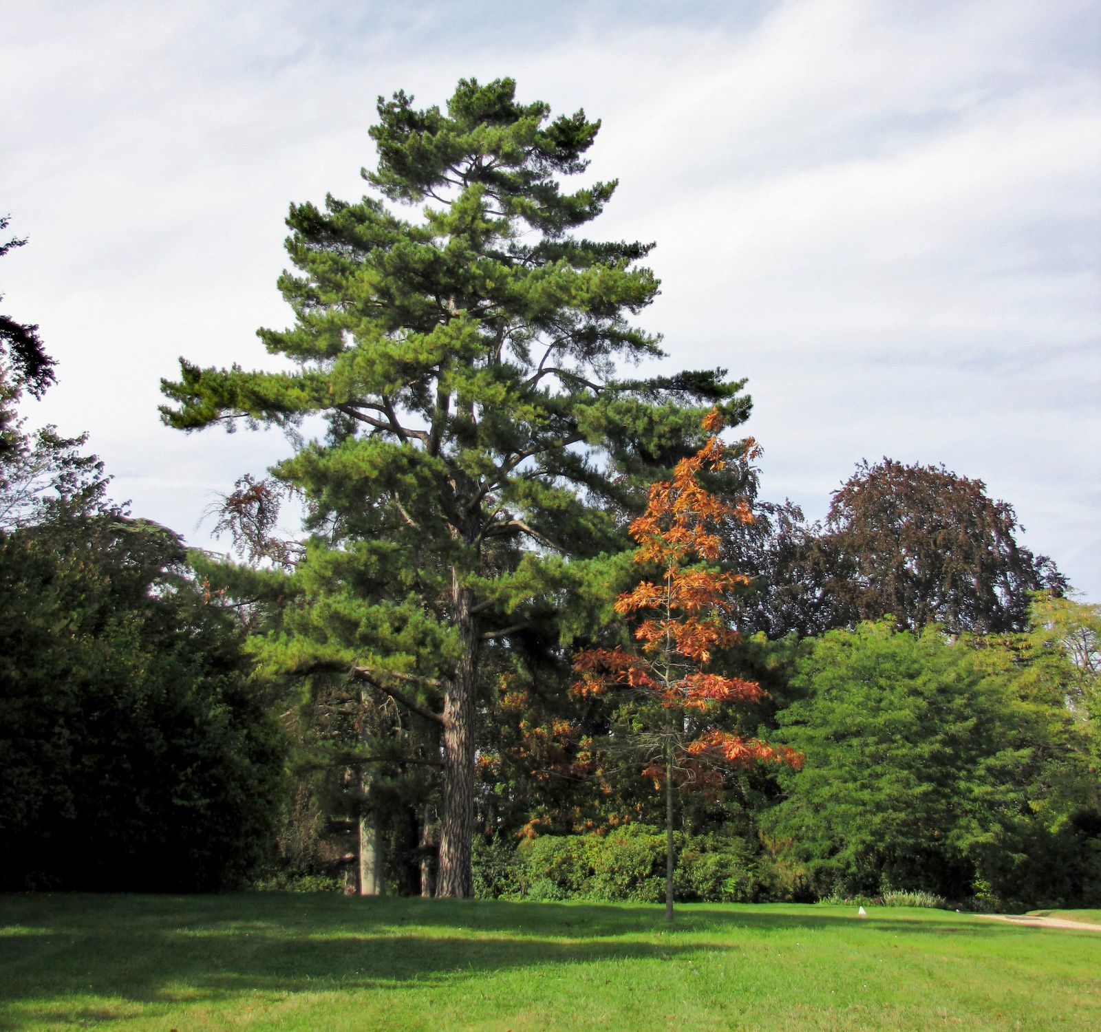 Le Jardin du Trocadéro du Parc de Sainf-Cloud, arbres remarquables