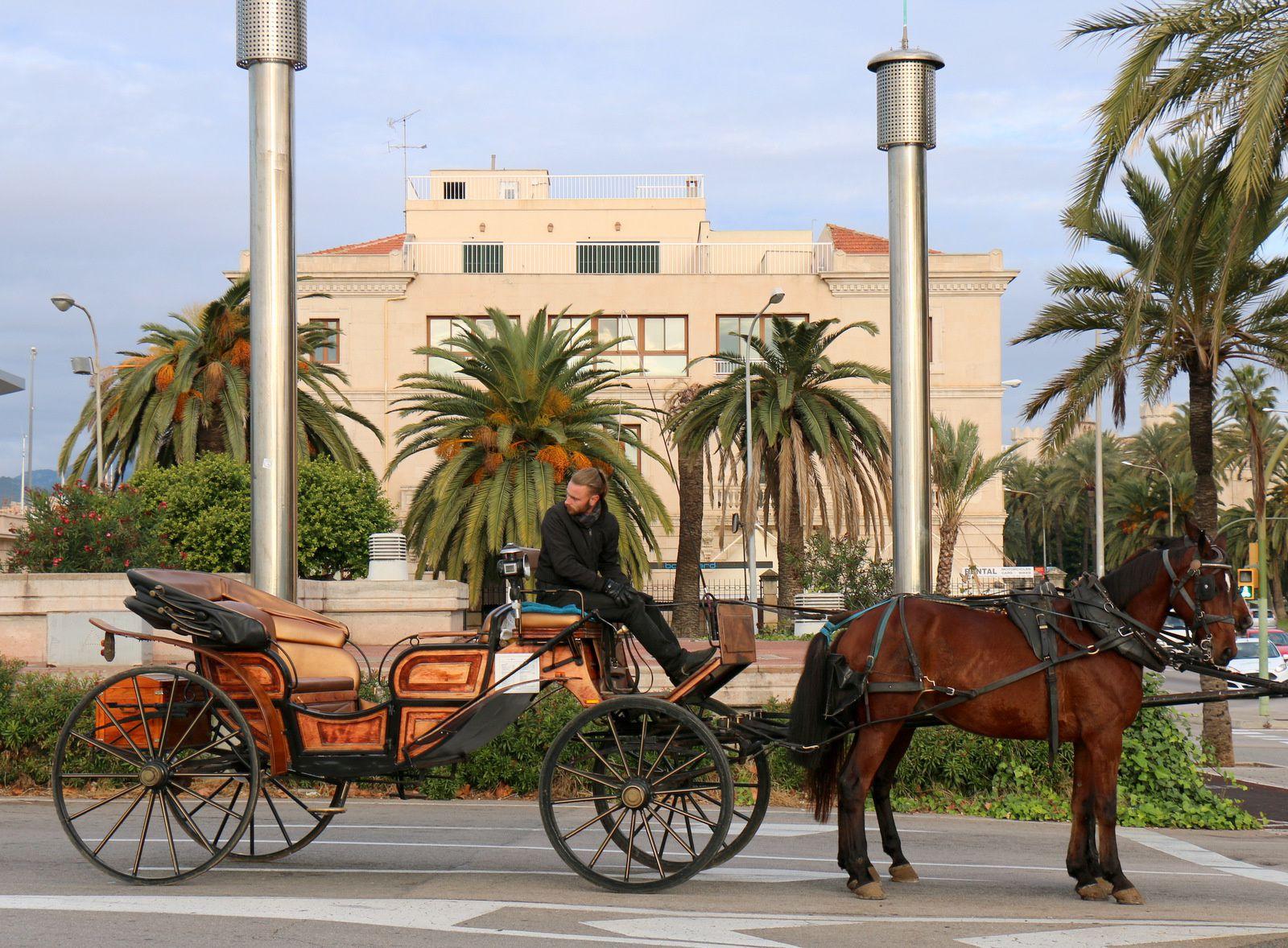 Calèches à Palma de Majorque