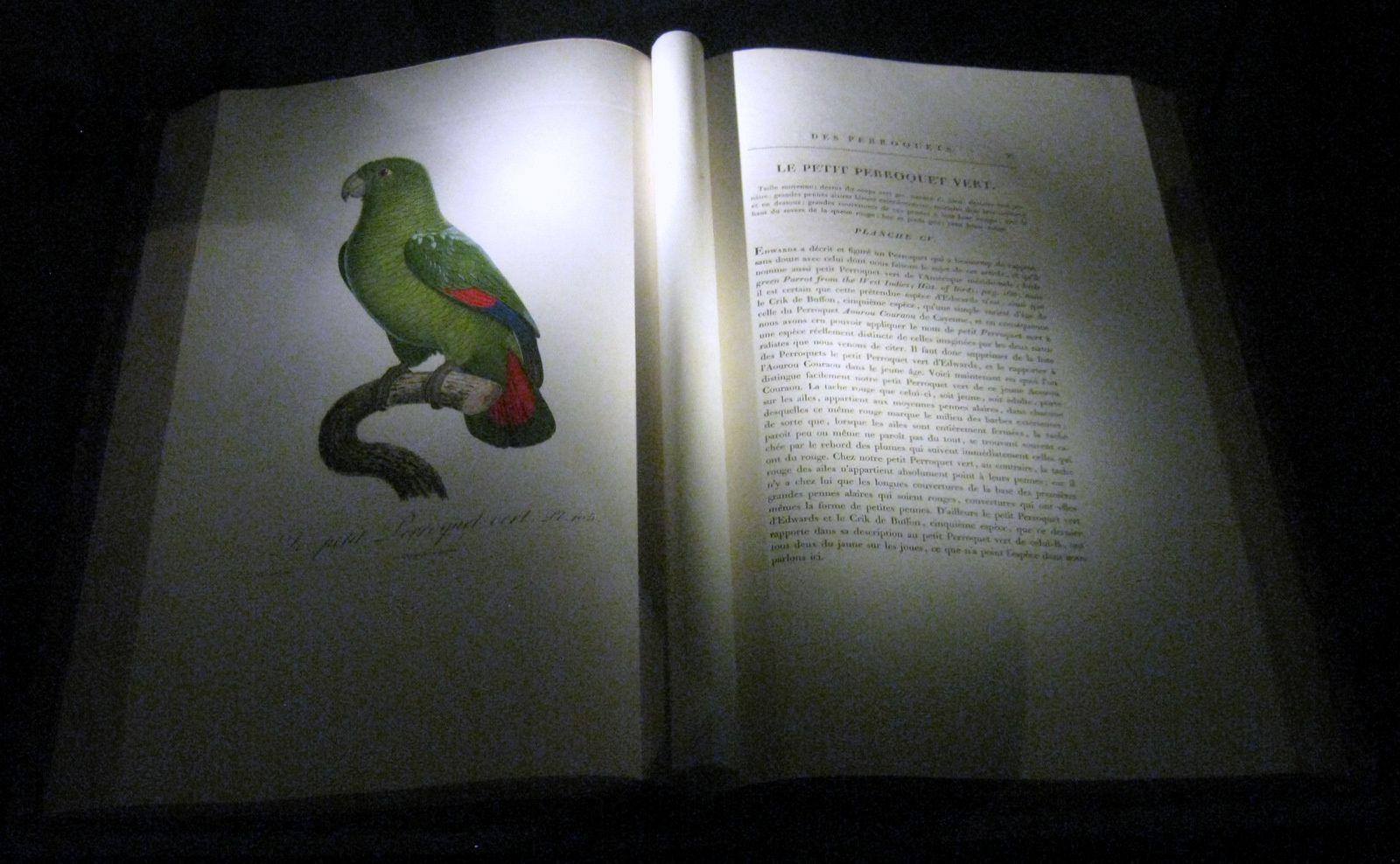 Jacques Barraband, perroquets, cacatoès et canard