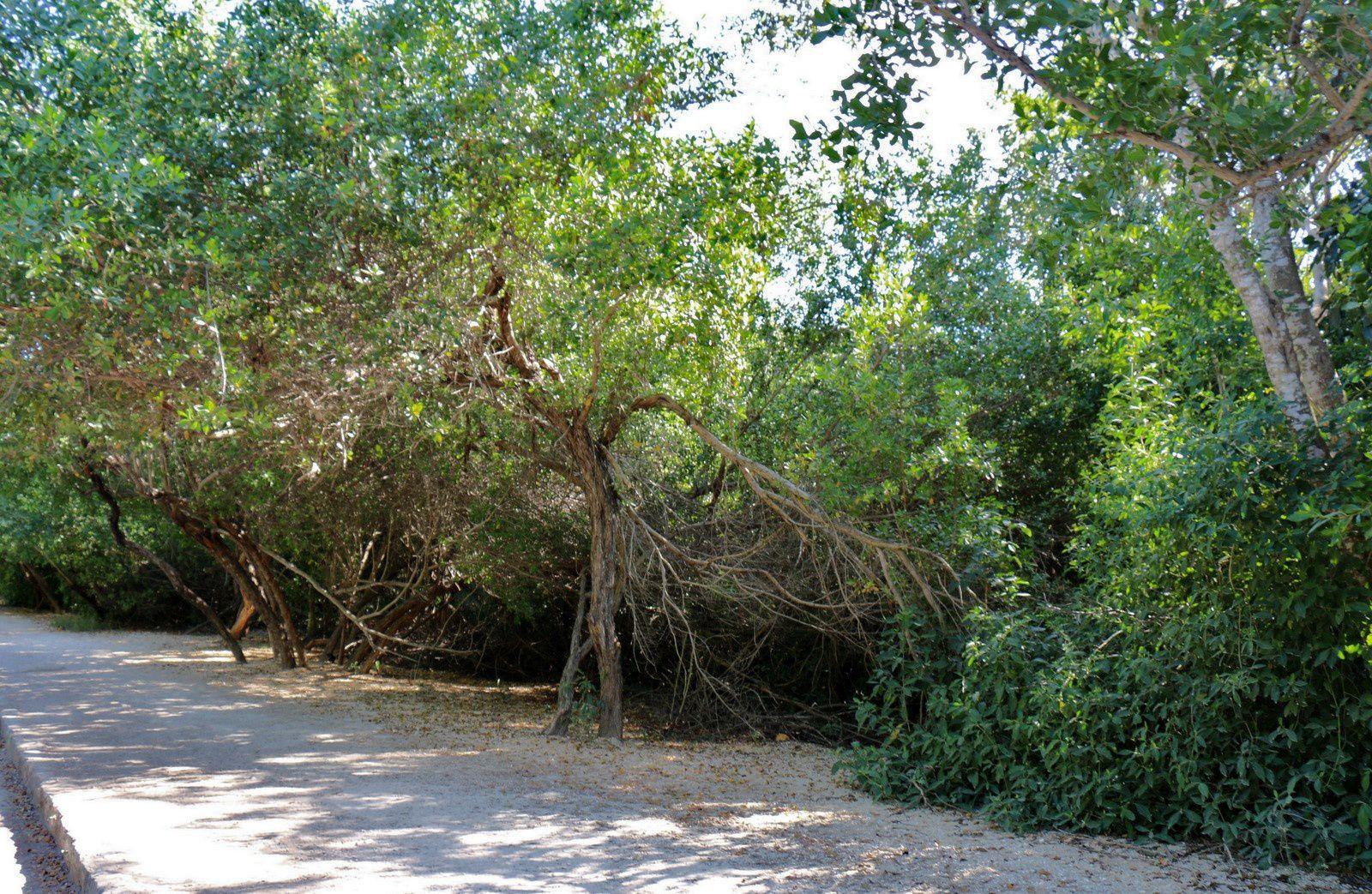 Site archéologique de Tolum, Mexique (les commerces de l'entrée)