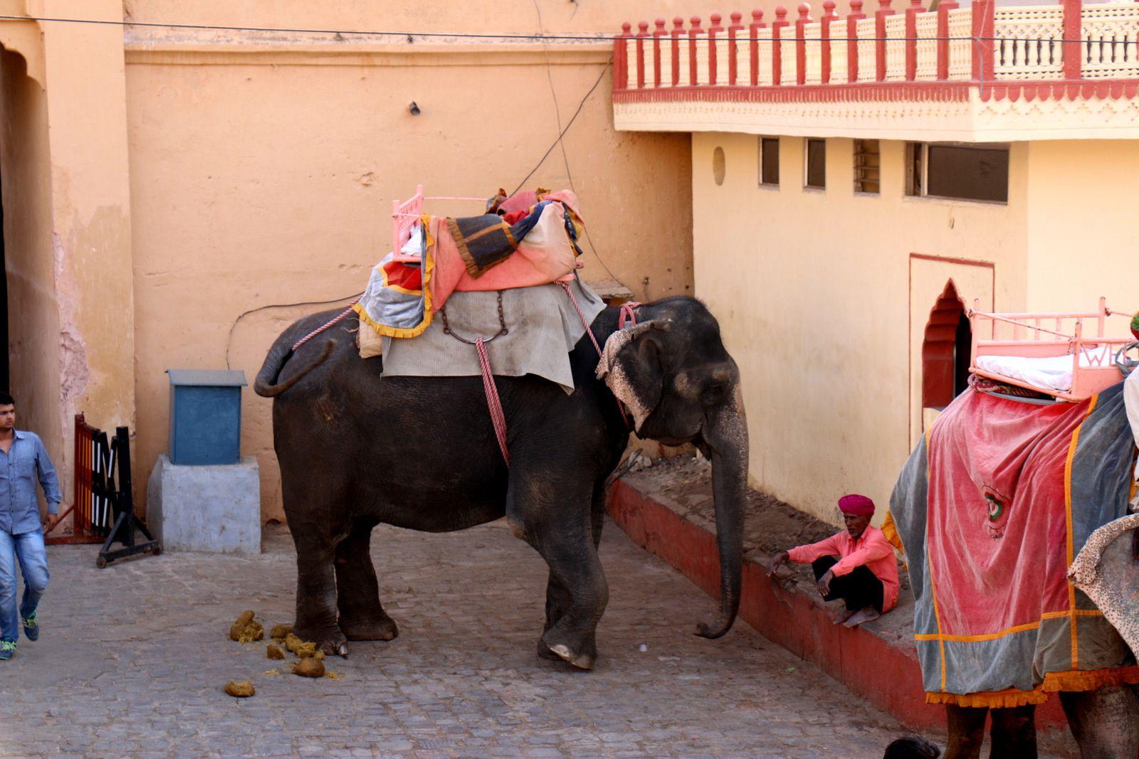 Les éléphants du fort d'Amber, Rajasthan (Inde)