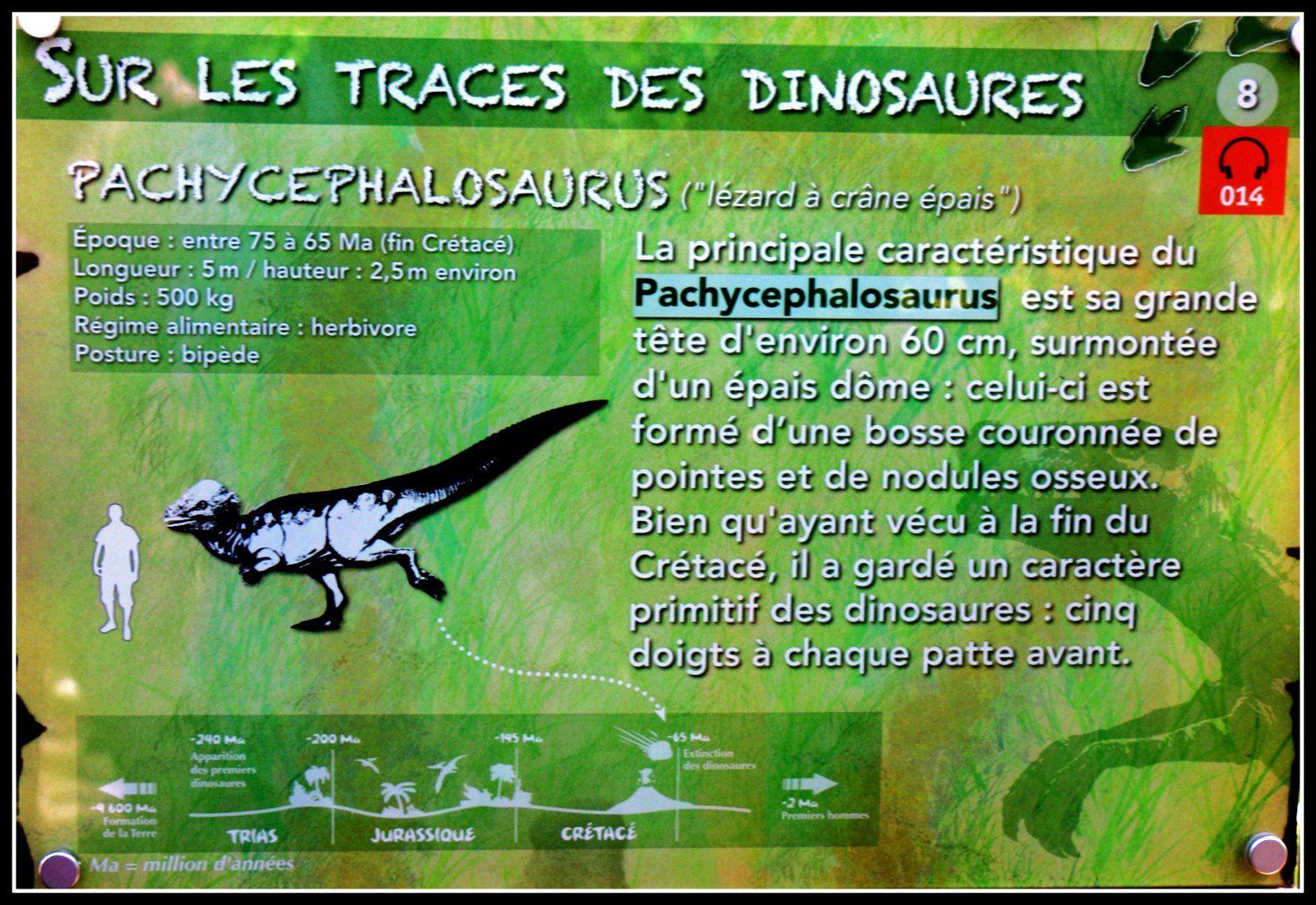 Pachycephalosaurus, sur les traces des dinosaures