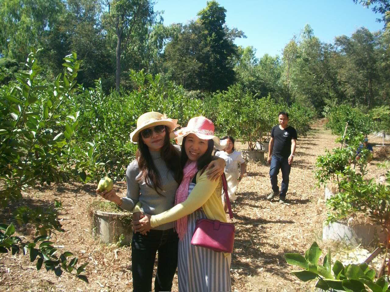 La famille de Jum à la plantation de citrons
