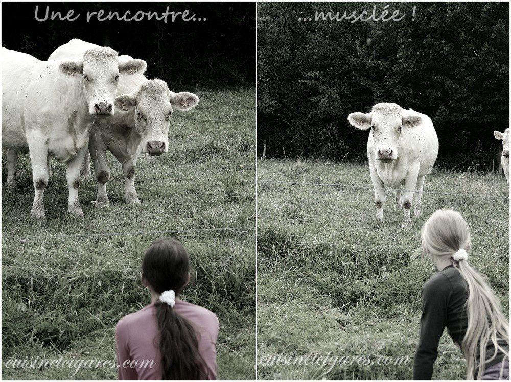 Rencontre musclée ! Heureusement le barbelé était bien là ! c'est vache, oui je sais ... :)