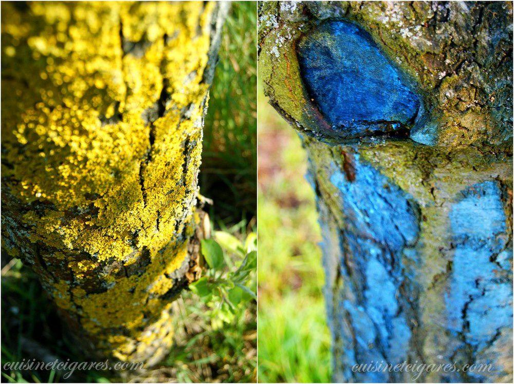 Les troncs portent leurs habits d'automne : les uns optent pour le jaune par les mousses et les lichens, les autres en bleu tentent de se protéger de tout parasite.