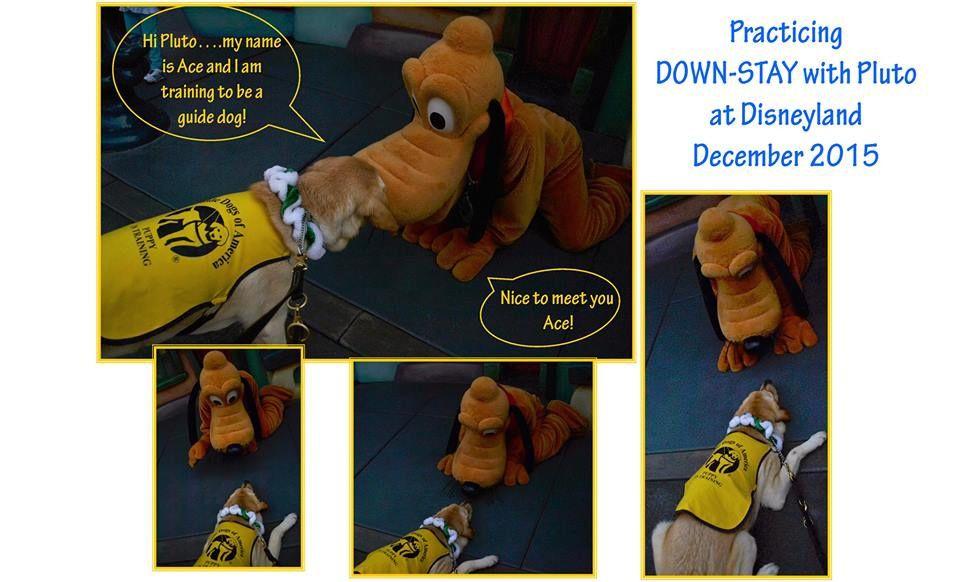Quand un chien d'aveugle rencontre Pluto