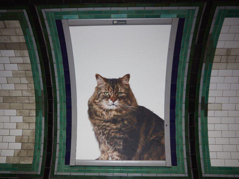 Les chats du métro de Londres