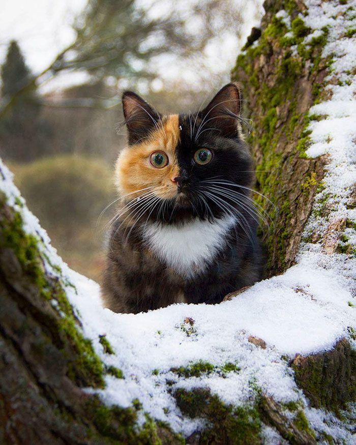 Yana, le chat bicolore