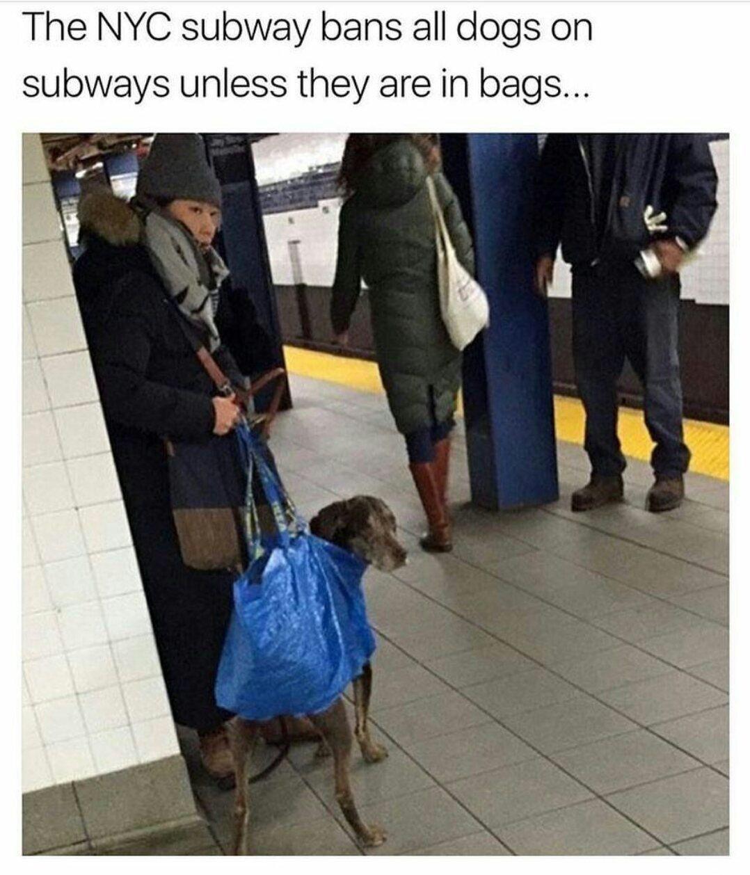 Dans le métro de New York, les chiens sont interdits sauf s'ils sont dans un sac !