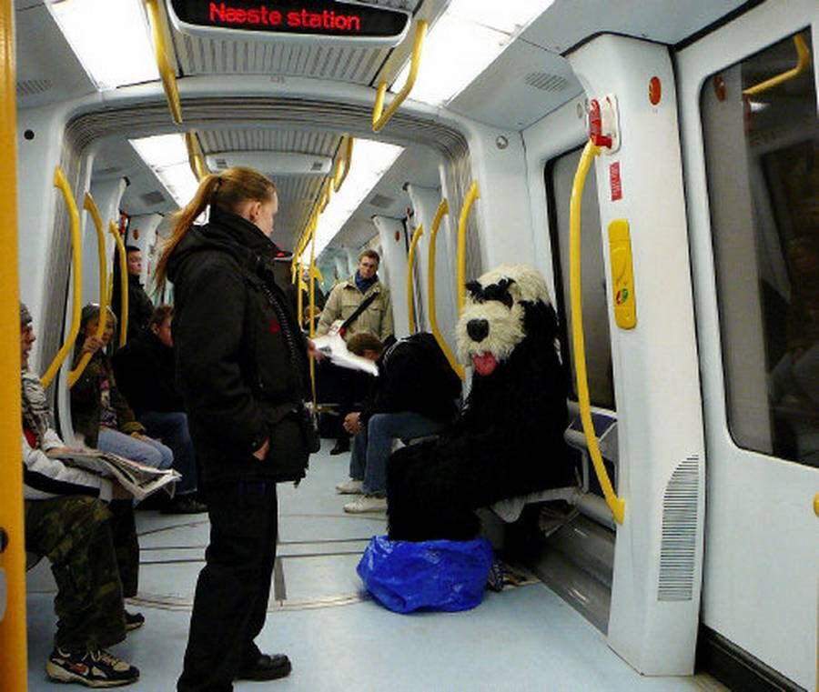 A NY, les chiens sont interdits de métro, sauf s'ils tiennent dans un sac !