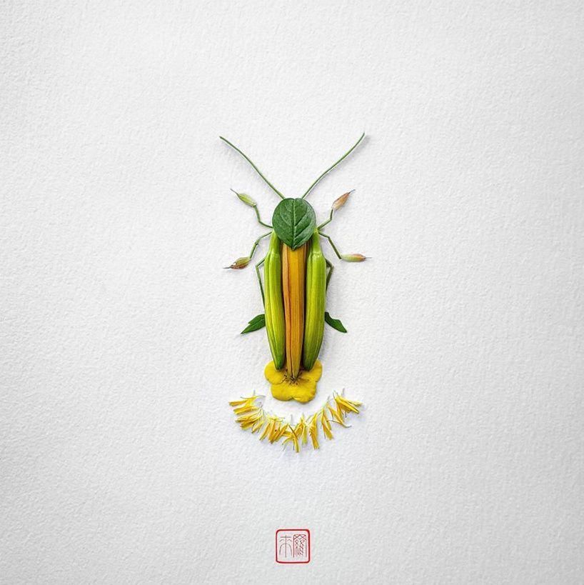 Les insectes végétaux de Raku Inoue