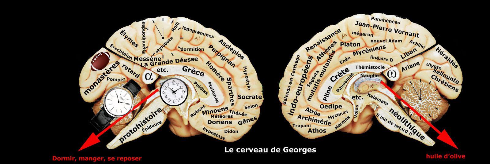 Le cerveau de Georges