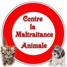 Infraction de bestialité: la Cour suprème canadienne se prononce sur la zoophilie à l'occasion de l'affaire DLW