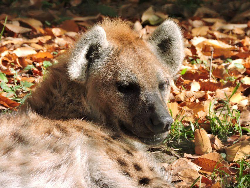 #Normandie #animaux #Zoo : NAISSANCES 2017 au #CERZA de #Lisieux ! Détails