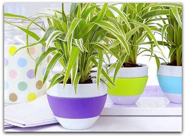 10 plantes dépolluantes pour une maison saine
