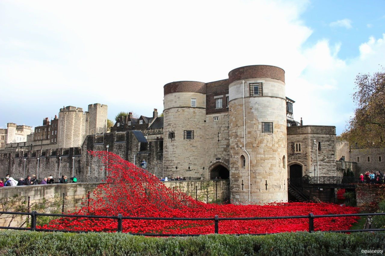 LES POPPIES DE TOWER HILL