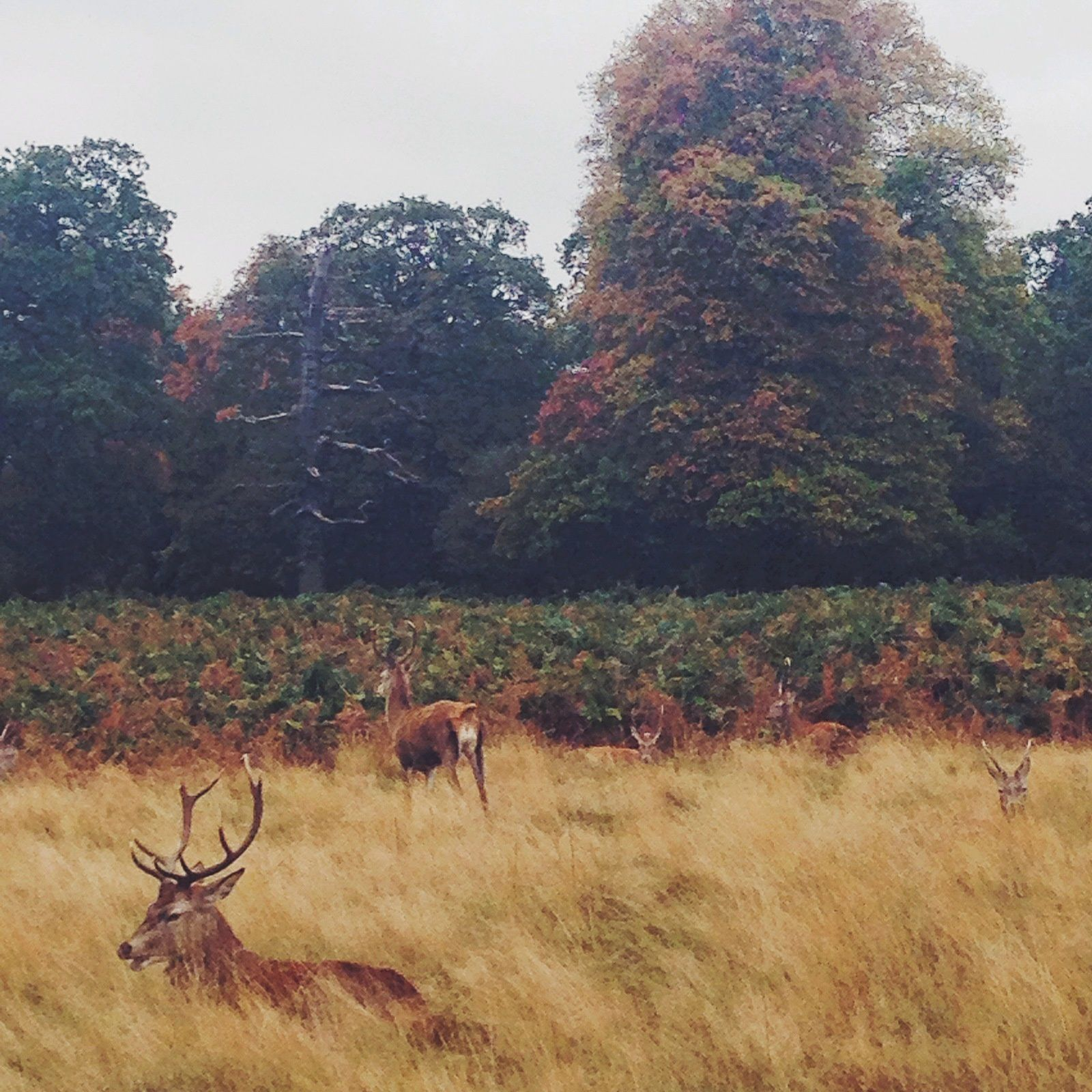 UNE BALADE À RICHMOND PARK
