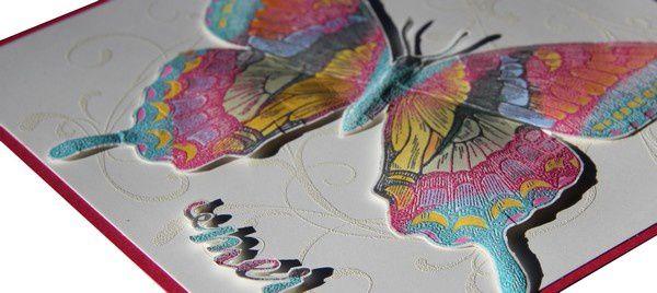 Encore un papillon!