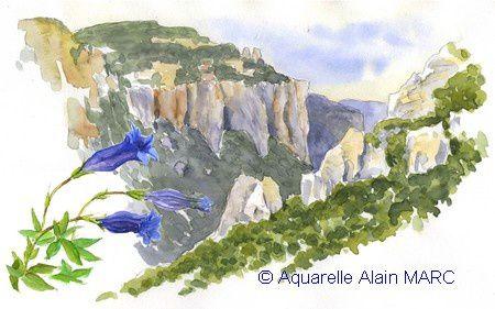 Grandioses paysages aux parois de calcaire plongeant vers les canyons ou sauvages horizons des causses seront au cœur de vos pages d'aquarelle …
