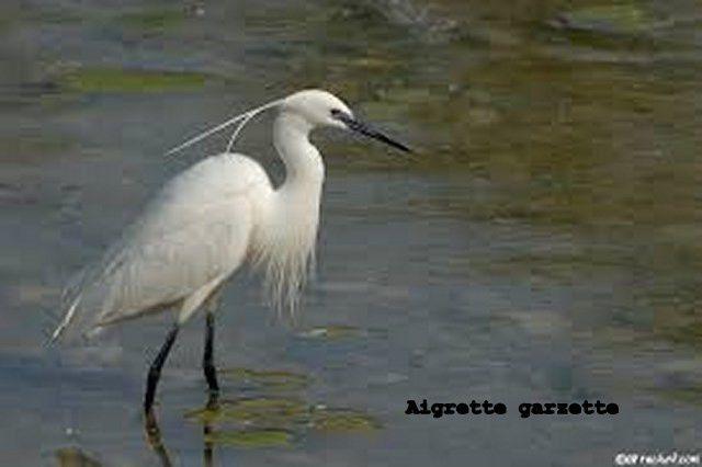 Magnifique faune en Luberon