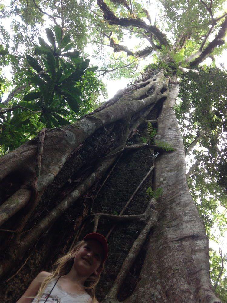Monts Koghis ~ Nouvelle Calédonie