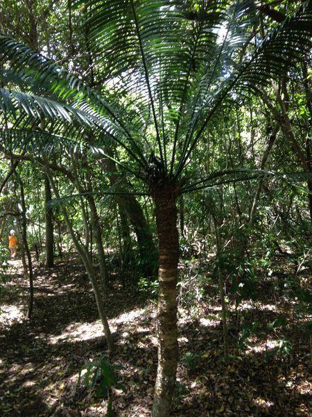 Plage de la roche percée ~ Nouvelle Calédonie