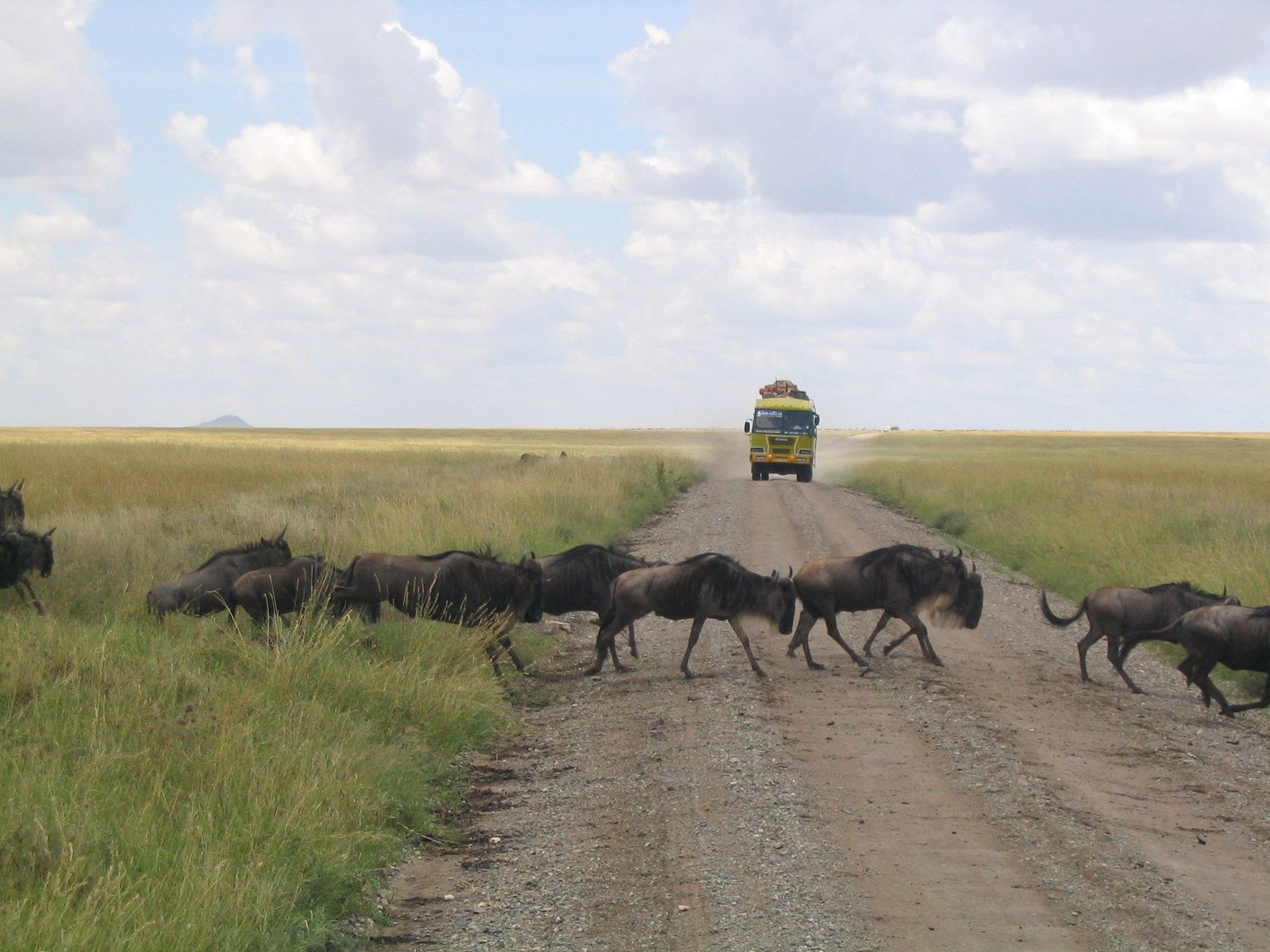 Safari au parc du Serengeti - Tanzanie