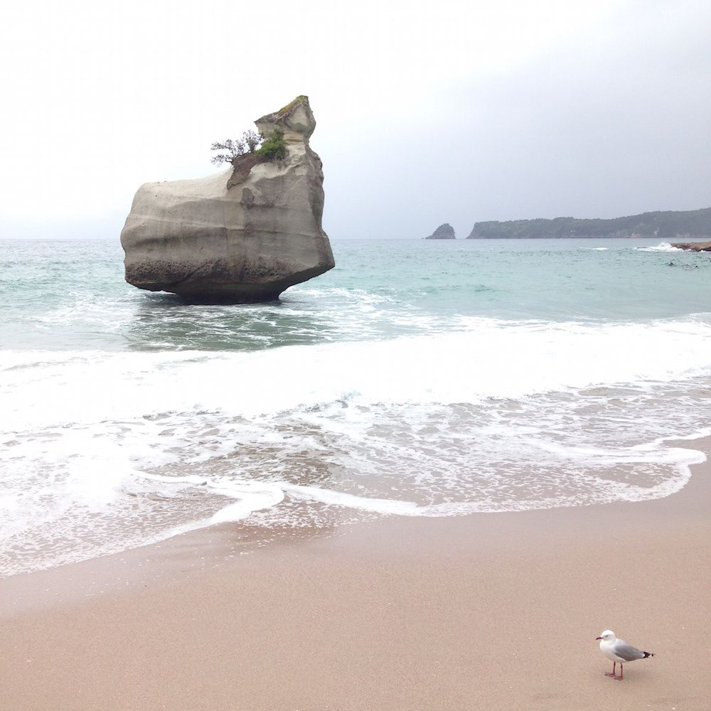 Jour 13 - Hot Water Beach et Cathedral Cove