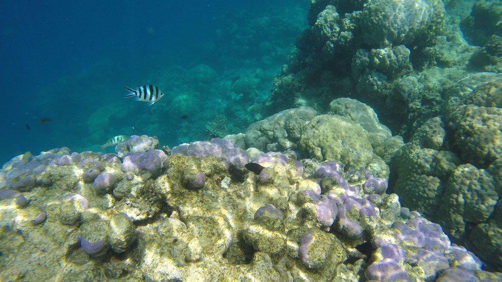 1ere sortie palmée de la journée sur le récif Tabou avec Emma et Noha qui s'essayent à de petites apnées