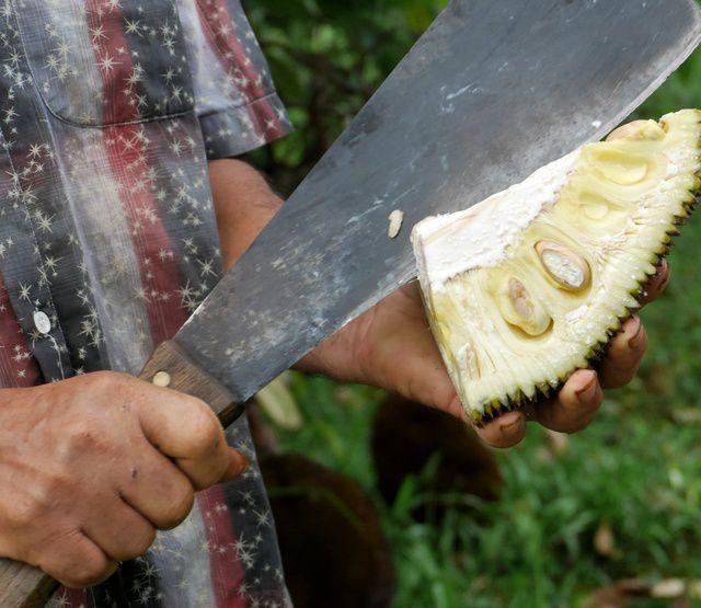 la Réunion 22 : visite d'une pépinière de fruitiers rares