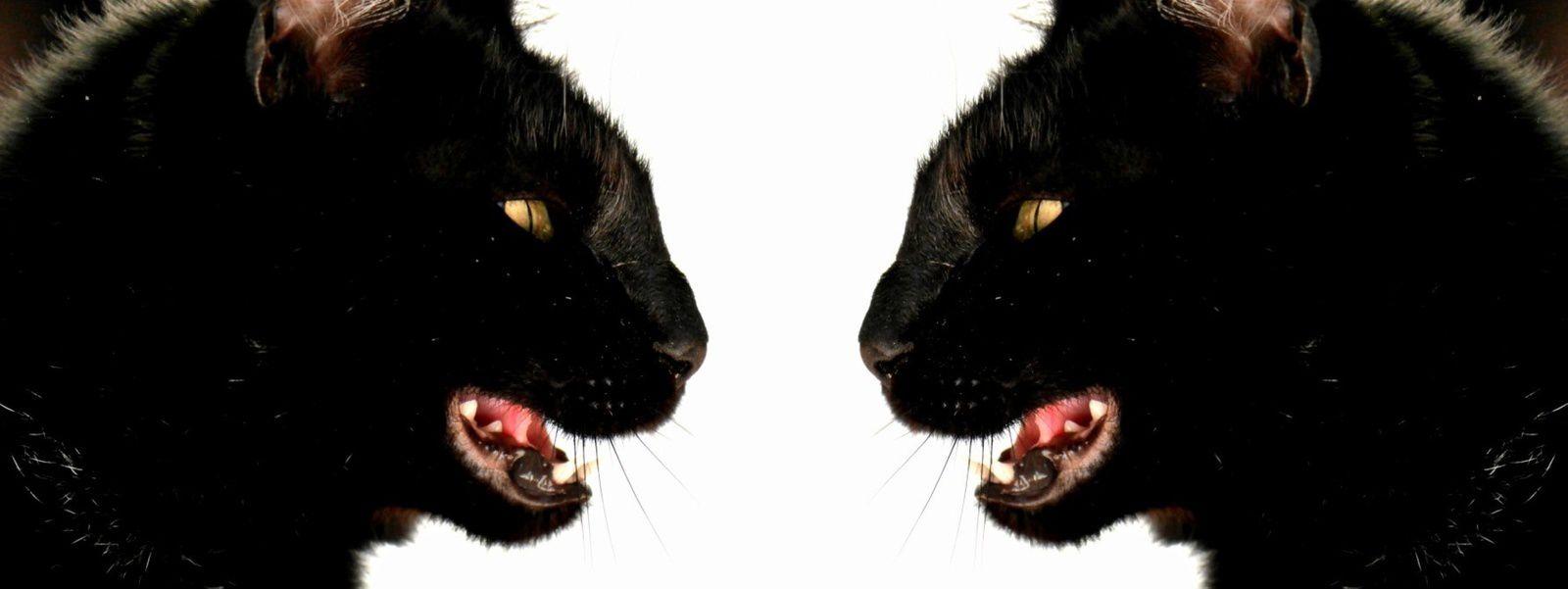la mimine aux deux visages
