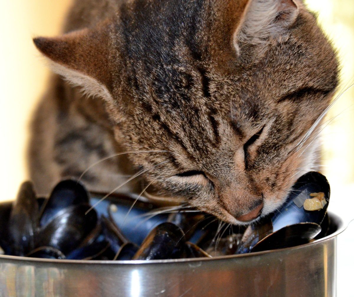 Chat moules