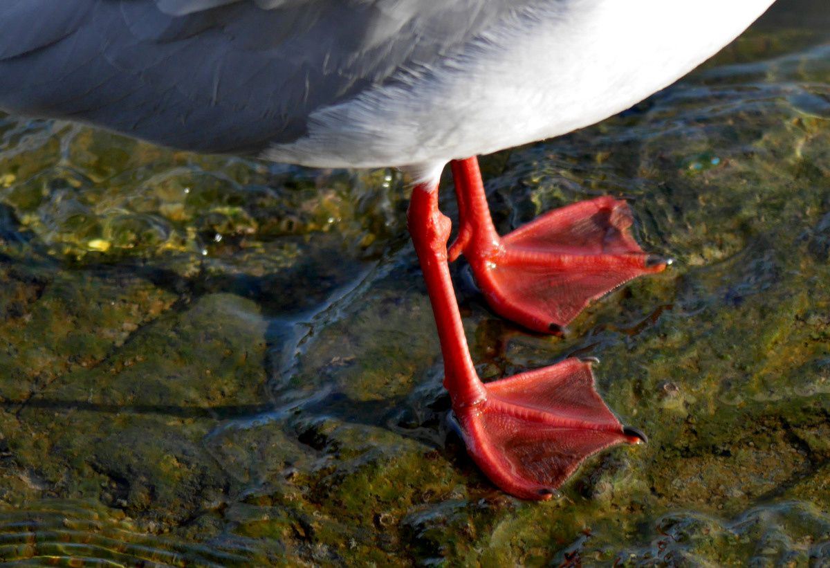 La playmouette porte des bas rouges....