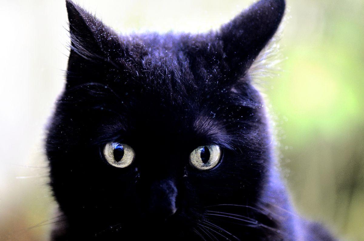 Mimine derrière la vitre, colère noire !