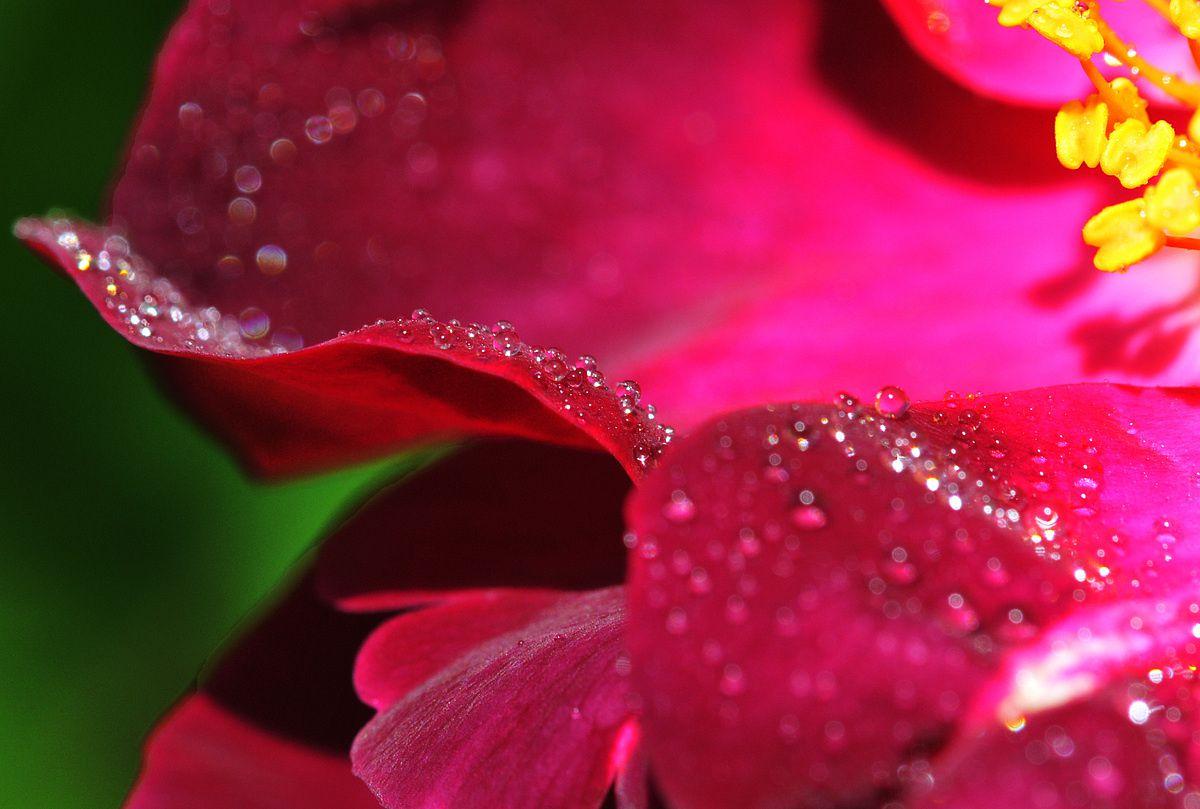 Beauté des roses…