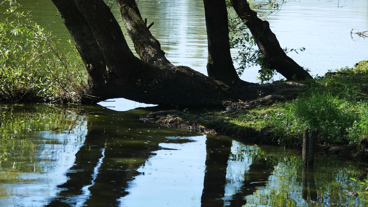 Le lac de Grand-Lieu (2/2)
