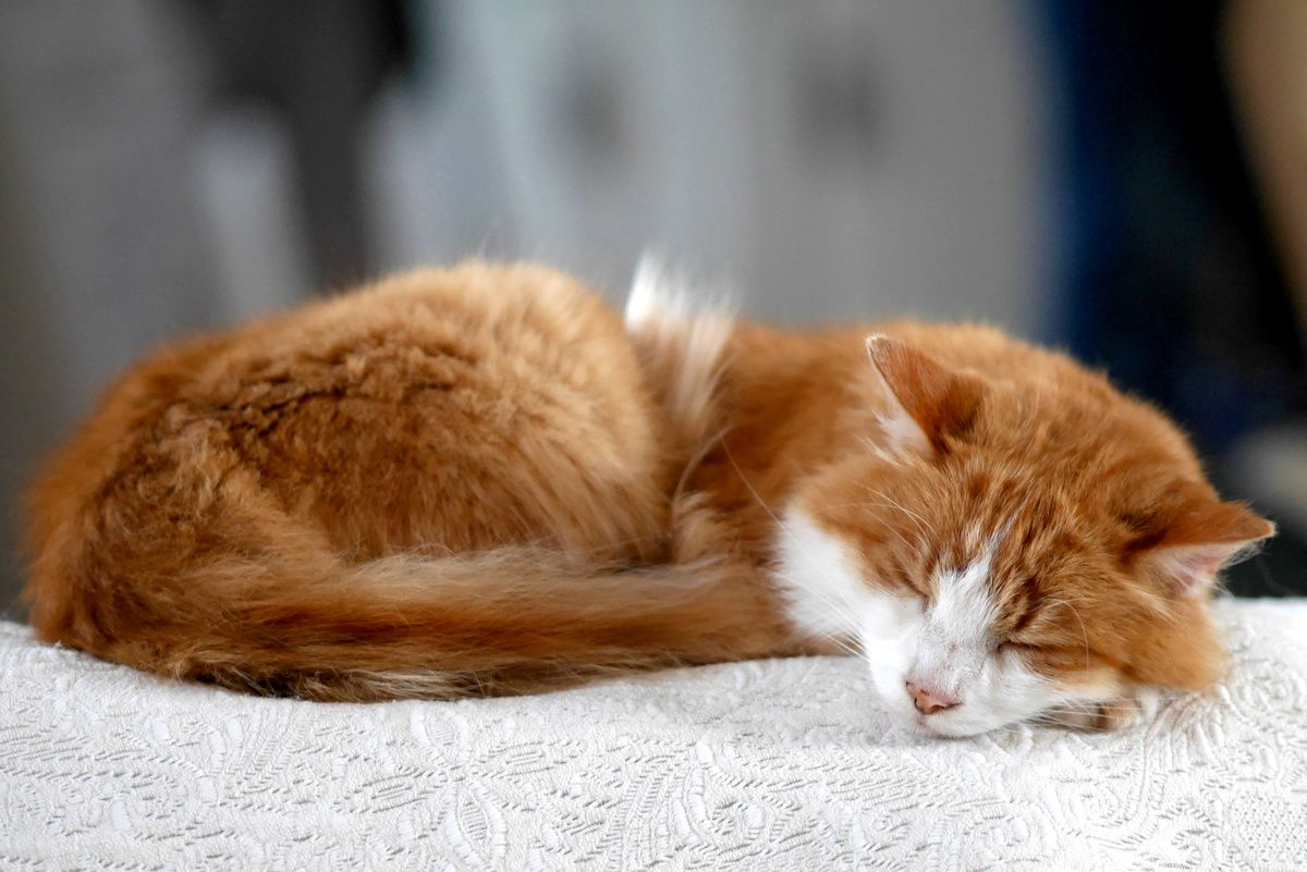chat qui dort, chien qui veille !