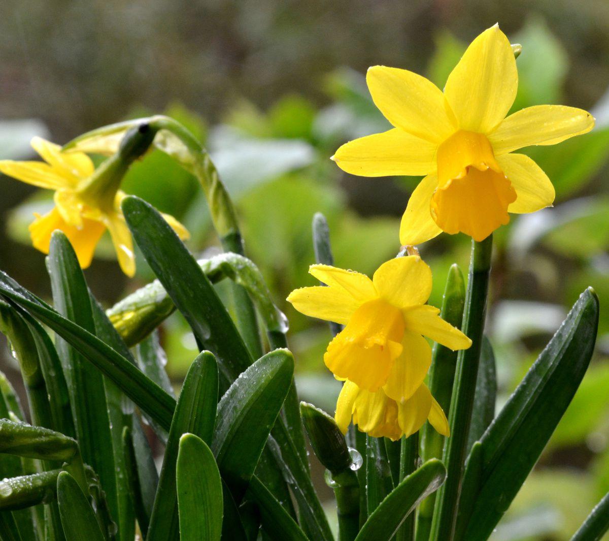 Le printemps se fait tirer l'oreille...