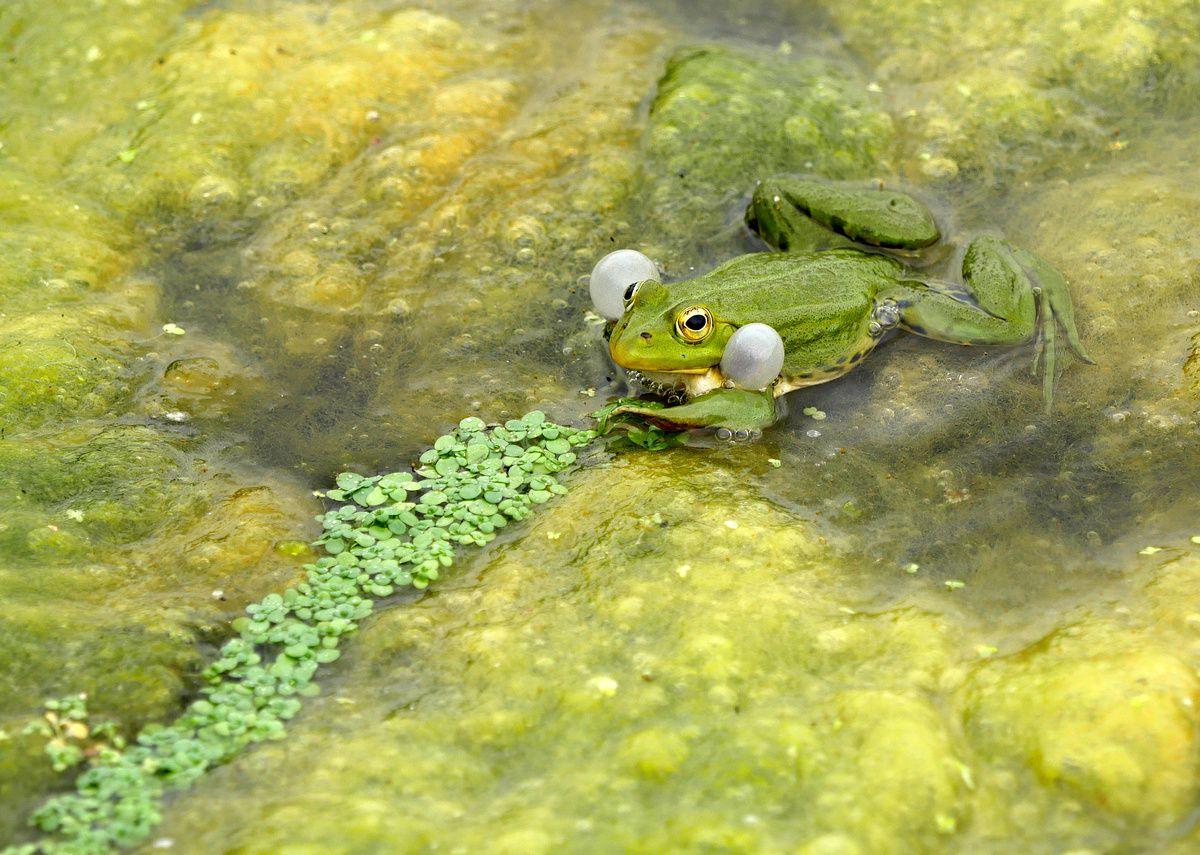 Froggy la grenouille